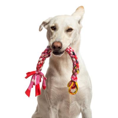 Von Aries Kennels Pet Accessories