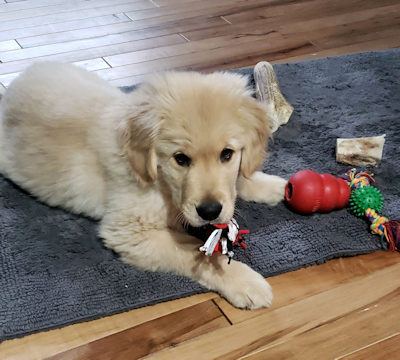 Von Aries Kennels Puppy Training